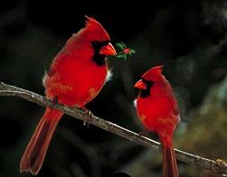 birds-1125156_960_720
