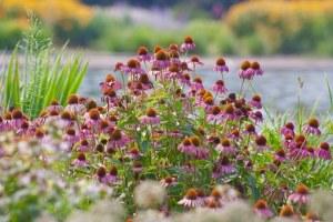 flowers-671189__340